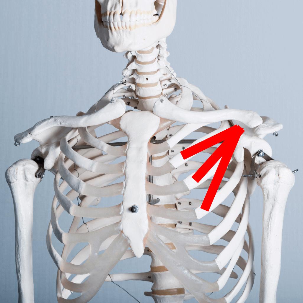 小胸筋が肩こりの原因に
