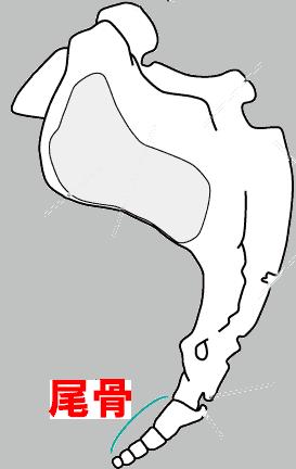 仙骨・尾骨